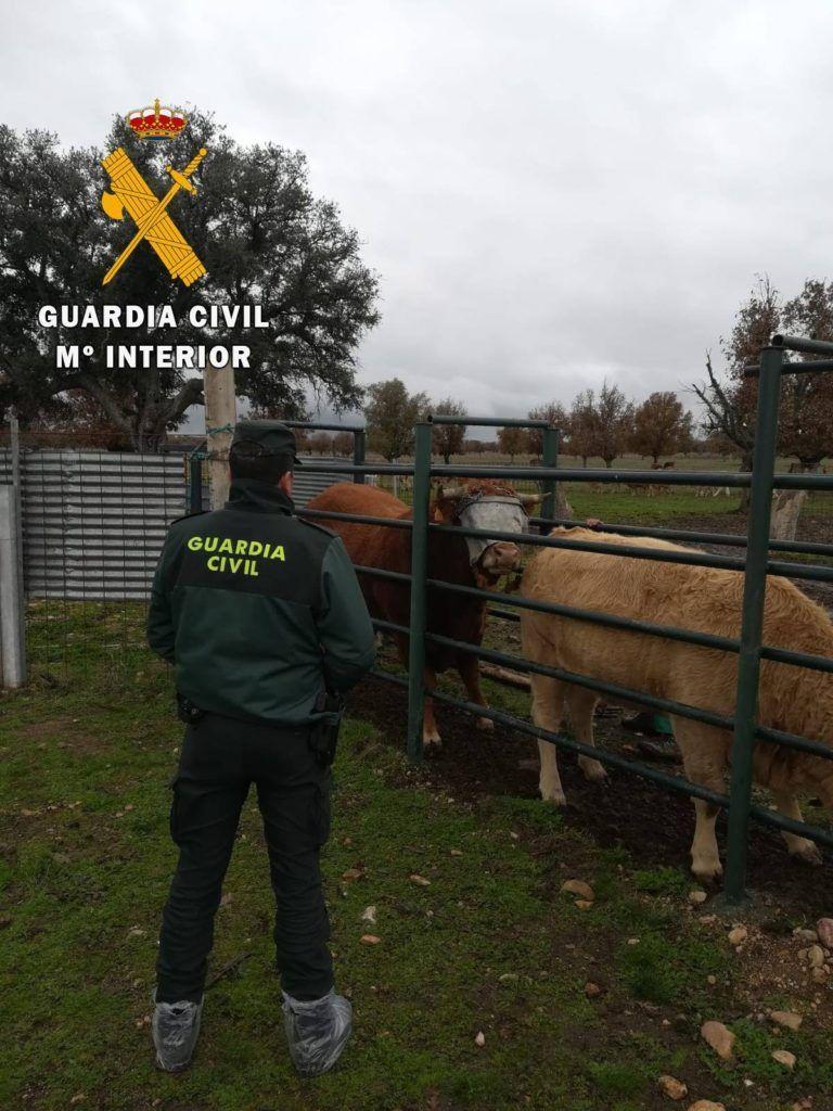 La Guardia Civil investiga a un varón como autor de un delito de maltrato animal