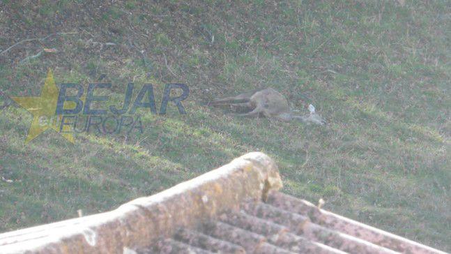 VÍDEOS | Cacería sin previo aviso en El Bosque