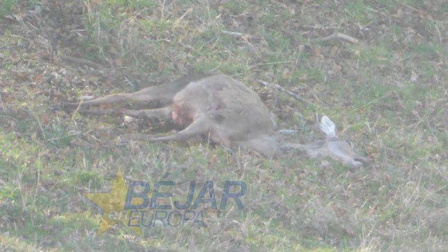 La crueldad con los animales no es algo que preocupe lo más mínimo al PP