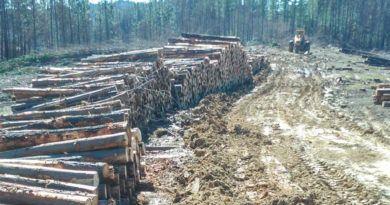 Editorial 491 | El humo de la madera bejarana