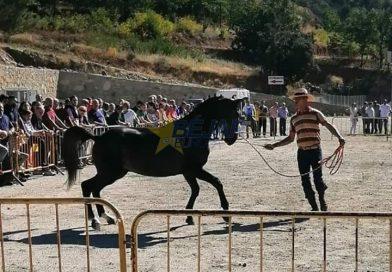 La Asociación 'Béjar A Caballo' hace un balance positivo de la última Feria de Ganado