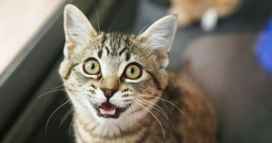 Editorial 502 | La gata Flora en Béjar