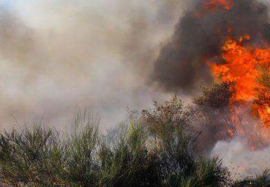 Pequeño incendio forestal en Sorihuela