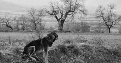 Editorial 504 | El perro del hortelano