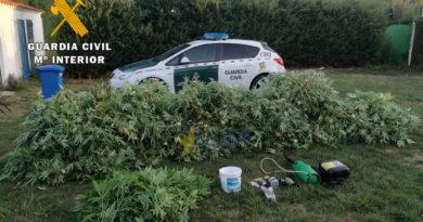 La guardia civil detiene a un varón como supuesto responsable de un delito de cultivo o elaboración de sustancias estupefacientes