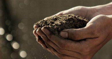 Zasnet promueve cursos online sobre agricultura, comercialización y gastronomía