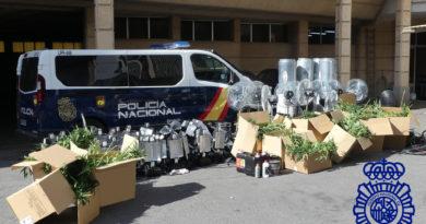 Intervenidas 2.900 plantas de marihuana en Salamanca
